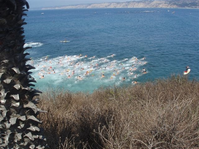 Start of the 2008 La Jolla Rough Water Swim